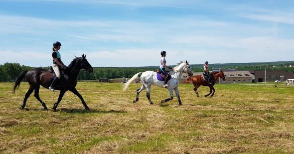 Дистанционные конные пробеги на фестивале